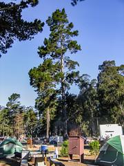 Campground 021 (davidseibold) Tags: america california morrobaystatepark sanluisobispocounty usa unitedstates camping eucalyptus jfflickr photosbydavid picnictable pine plant postedonflickr sky tent tree vehicle morrobay unitedstatesofamerica