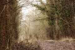Mystic forest / Misztikus erdő (Ibolya Mester) Tags: hungary magyarország ásványráró forest woods path outdoor natur nature color colors winter trees canon canoneos600d