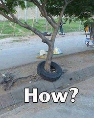 How is it possible (gagbee18) Tags: aww awwwtf funny funnypics howisitpossible lmao pics