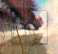 Zion Abstract (Karen McQuilkin) Tags: goldfinches zion icm abstract layers owntextures
