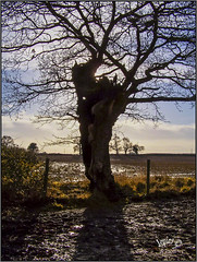 Mud Mud And More Mud. (Picture post.) Tags: landscape nature green tree fence mud bluesky clouds winter rain shadows paysage arbre sticky
