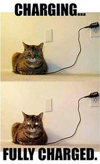 Full charged (gagbee18) Tags: animals aww catmemes cats charge charger funny