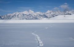 footprints (laura's Point of View) Tags: winter snow cold mountains landscape white sky tetons gtnp grandtetonnationalpark findyourpark footprints kelly wyoming jacksonhole beautiful serene peaceful seasons lauraspointofview lauraspov