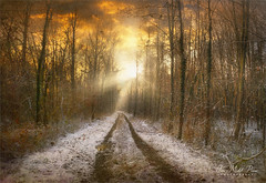 White road (Jean-Michel Priaux) Tags: paysage nature landscape winter forest tree trees snow alace france trace way pathway sunset shadows cold line priaux poetry
