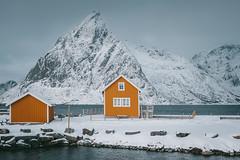 Rorbu color senape, Lofoten