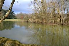 """Pâles reflets dans les étangs (Brigitte .. . """"Tatie Clic"""") Tags: 202001266 janvier hiver étang eau arbres ilot refletsdansleau lotetgaronne aquitaine francesudouest tronc"""