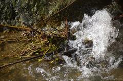 """Le petit bouillon glacé (Brigitte .. . """"Tatie Clic"""") Tags: 202001268 janvier hiver eau gouttesdeau cascade lotetgaronne aquitaine francesudouest"""