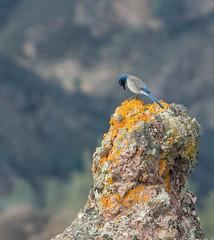 _73A8665.jpg (tvalenti17) Tags: pinnacles