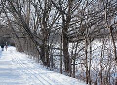 Matinaux (Fransois) Tags: skitracks marcheurs walkers hiver winter montréal qc iledelavisitation