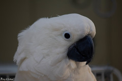 Parrot (paheg2) Tags: love cute portrait p photography photo me romance animal mother funny blue bird baba lens kids 50lens children canon