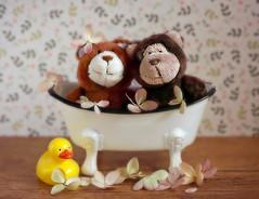Bears in the tub (Through Serena's Lens) Tags: smileonsaturday bonniebears stuffedtoy teddybear small closeup soft stilllife tabletop canoneos6dmarkii tub duck flower hydrangeas