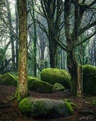 Rocks and trees (jorgeverdasca) Tags: trees moss goth nature landscape woodland forest mist fog sintra portugal