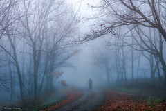 My inspiration... (jaegemt1) Tags: blueridgeparkway love travel traveling road virginia mariajaegerphotography jaegemt1 landscape fog forest foggy foggypath outdoors tranquil traveler followyourheart