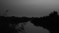neusiedel_evening_09 (Explored) (rhomboederrippel) Tags: rhomboederrippel fujifilm xe1 august 2019 europe austria burgenland neusiedlamsee neusiedlersee reed eveninglight sunset lake water bluehour bw monochrome