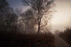 Where the thoughts have no name (Didacus67 (mostly off, my friends...)) Tags: trees poplars sun light goldenlight fog mist vapours adda italy fiume meandri alberi pioppi autumn fall autunno morning mattina earlymorning sunrise alba foschia nebbia bruma silence silenzio peace pace dawn daybreak nikon d5100 thegimp luminositymasks glowingmist glowing glow nikcolorefexpro4 mystery mysteryous unearthed path track fallenleaves bushes scrub hills