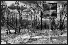 Gone (itsallgoodamanda) Tags: blackandwhite monochrome oilpaint mixedmedia photography photoborder burntlandscape burntbush burnttrees burnedlandscape landscape landscapephotography landscapecoast sign burntsign amandarainphotography australia australianlandscape australiassouthcoast bushfireaftermath australiaseastcoast australianphotography australianbush australiasbushfires itsallgoodamanda jervisbayphotography shoalhaven