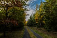 Unser Wald  (28) (berndtolksdorf1) Tags: deutschland thüringen wald weg himmel bäume jahreszeit herbst autumn trees outdoor