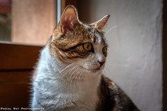 _DSC2646AL (Pascal Rey Photographies) Tags: cat cats katze gatto chat chats félidé félin animaux animals animalerie animales animali tiere pascalrey nikon d700 aurorahdr luminar3 skylum pascalreyphotographies