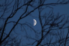 Waxing Crescent Betwixt Branches (Epiphany Appleseed) Tags: moon moonintheuk uk england astro astronomy astrophotography astrophysics lunar waxing waxingmoon crescent crescentmoon waxingcrescentmoon waxingcrescent afternoon branches tree february 2020