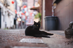 猫 (fumi*23) Tags: ilce7rm3 sony sel55f18z emount 55mm sonnartfe55mmf18za sonnar zeiss a7r3 animal alley neko cat chat gato bokeh street depthoffield dof ねこ 猫 ソニー
