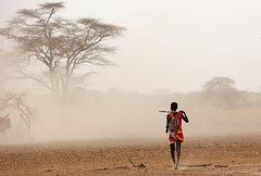 South Rift Valley - Kenya - Masaï returning to the village with cattle (lotusblancphotography) Tags: africa afrique kenya southriftvalley travel voyage people gens masaï dust poussière cattlebétail