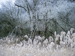 Lindauer Moor 240120-24 (martinritter1) Tags: natur trebgast moor winter baum