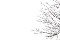 Minimal Winter (Tiziano Caviglia) Tags: fujinonxf50mmf2rwr fujifilmxt2 fujifilm italien italie italy italia ligurien ligurie liguria rivieradellepalme savona inverno winter hiver invierno albero baum arbre árbol natura nature natur naturaleza piante plants plantes planta plantas silhouette tree chiaroscuro