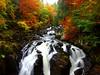 Birnham Falls in autumn forest