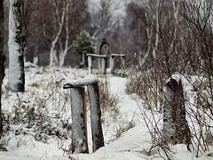 Hohes Venn / Eifel (PHOTOGRAPHY Toporowski) Tags: eifel moor cold landscape landschaft kalt schnee eifelliebe hohesvenn winter belgien begium mützeneich monschau nature outside roetgen eifelsteig struffelt naturschutzgebiet