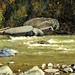Salmon Stream - Alaska