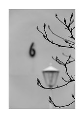 6 with a lamp and a tree (Armin Fuchs) Tags: arminfuchs lavillelaplusdangereuse lamp 6 tree branches winter