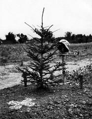 ppp.1 - Copy (4) (BlackWatch2000) Tags: russland deutschland russia germany ww2 grab grave helmet war tree