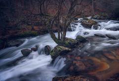 Arroyo de la angostura (Chusmaki) Tags: agua largaexposición rascafria bosques rios ngc sonya7rii