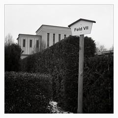 Memento Mori (I) (Maximilian Busl) Tags: blackandwhite rolleicord hof cemetry graveyard contemplation sepia film analog ilford rollei