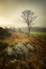 sunlit birch (akh1981) Tags: travel trees nisi nature nisifilters nikon nationalpark nationalheritage nationaltrust nationalheritagesite outdoors tree rocks walking wideangle sky clouds countryside cumbria valley beautiful benro mountains moody landscape lakedistrict fells uk unesco