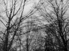portrait of January (RubyT (I come here for cameraderie)) Tags: lgg7thinq trees rain bw nb bn blackandwhite schwarzweiss noiretblanc blancoynegro mono monocromo monochrome blur черноеибелое