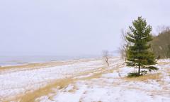 025595a  White Snow And White Noise (David G. Hoffman) Tags: lake lakeshore lakemichigan beach beachgrass winter snow waves