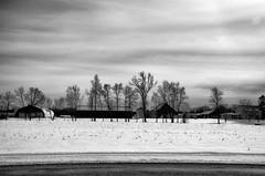 Layers... (Kat Hatt) Tags: snow napanee field farm trees sky bw kathatt layers winter canada day