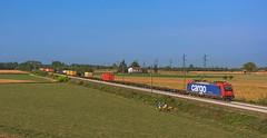 Re484 006 (maurizio messa) Tags: sbbci mir cargo intermodale pavese nikond7100 lombardia mau bahn ferrovia freighttrain fret guterzuge re484 bombardier traxx treni trains railway railroad
