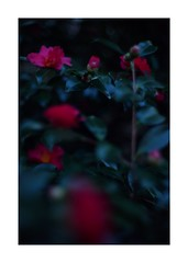 This work is 9/24 works taken on 2019/12/31 (shin ikegami) Tags: sony ilce7m2 a7ii sonycamera 50mm lomography lomoartlens newjupiter3 tokyo 単焦点 iso800 ndfilter light shadow 自然 nature naturephotography 玉ボケ bokeh depthoffield art artphotography japan earth asia portrait portraitphotography