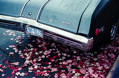 Skylark (bhop) Tags: leica m6 rangefinder vintagecamera rangefindercamera leicam6 kodak kodakfilm portra400 portra kodakportra400 iso400 summicron 50mm leaves skylark vintagecar american car classiccar