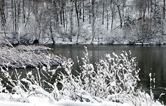 Thames River in winter, London, Ontario (klauslang99) Tags: klauslang winter nature naturalworld river thames london ontario canada snow