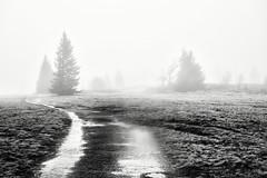 Fog and Rain but no Snow... (Ody on the mount) Tags: anlässe blackwhite bäume em5iii fototour kandel landschaft nebel omd olympus pflanzen schwarzwald urlaub wege bw blackandwhite fog landscape monochrome sw schwarzweis trees ways waldkirch badenwürttemberg deutschland