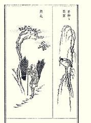 Right – common kingfisher (Japanese Flower and Bird Art) Tags: bird common kingfisher alcedo atthis alcedinidae tojiro arai ukiyo woodblock picture book japan japanese art readercollection