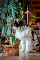 _DSC2648A (Pascal Rey Photographies) Tags: cat cats chat chats katze gatto animaux animalerie animals animales animali tiere pascalrey d700 nikon aurorahdr pascalreyphotographies home friendship compagnons