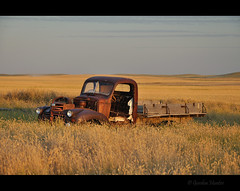 color me calm (Gordon Hunter) Tags: tan gold dried grass field prairies warm rust green simple truck old abandoned decay ab canada gordon hunter nikon d5000 country rural summer auto vehicle pickup