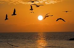 Tel Aviv sunset (Poupetta) Tags: sunset telaviv israel mediterranean birds sun light sea