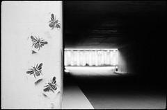 Spillern (Harald Reichmann) Tags: spillern autobahn unterführung biene insekt bild alltagskunst film nikonfe2 beton