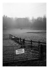FILM - Poorly horse (fishyfish_arcade) Tags: 35mm analogphotography bw blackwhite blackandwhite filmphotography filmisnotdead hp5 horse istillshootfilm monochrome nikkor2880f3556afd nikkor50mmf18afd nikonf80 analogcamera film ilford mist mono