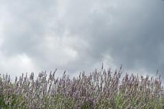 Bon Dimarts de núvols a Vilallonga de Ter, Ripollès, Girona. (heraldeixample) Tags: núvols clouds nubes skyer nuages cymylau nuvole 雲 nuvens nori 云 облака wolken nwn martesdenubes ngc heraldeixample bcn spain espanya españa spanien catalunya catalonia cataluña catalogne catalogna vilallongadeter girona gerona albertdelahoz
